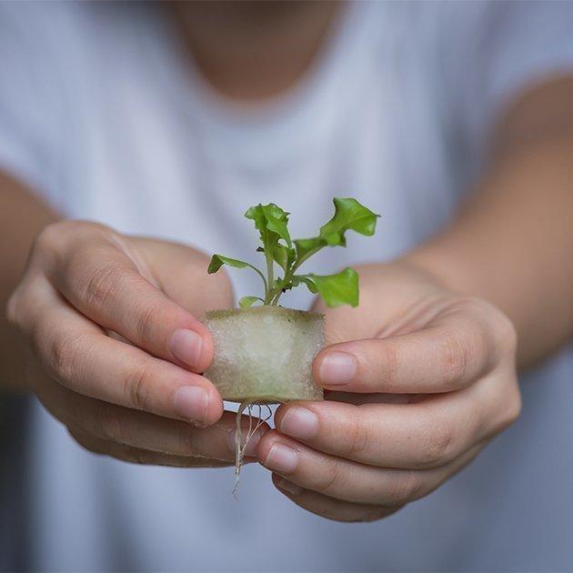 vegetable seedling hydroponic indoor gardening